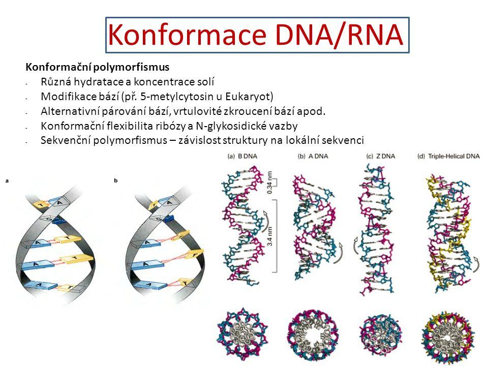Konformace DNA/RNA Konformační polymorfismus - Různá hydratace a koncentrace solí - Modifikace bází (př. 5-metylcytosin u Eukaryot) - Alternativní pár