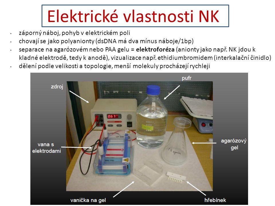 Elektrické vlastnosti NK záporný náboj, pohyb v elektrickém poli chovají se jako polyanionty (dsDNA má dva mínus náboje/1bp) separace na agarózovém nebo PAA gelu = elektroforéza (anionty jako např.