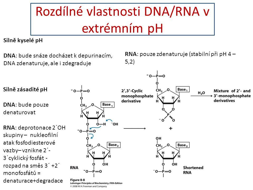 Rozdílné vlastnosti DNA/RNA v extrémním pH Silně kyselé pH DNA: bude snáze docházet k depurinacím, DNA zdenaturuje, ale i zdegraduje RNA: pouze zdenat
