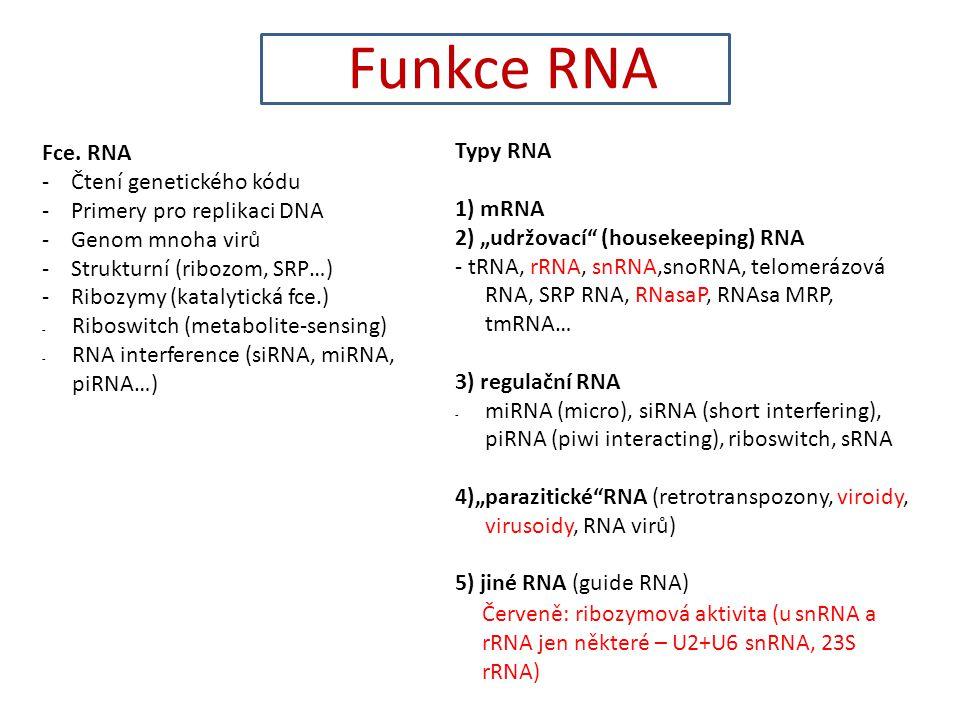 Funkce RNA Fce. RNA - Čtení genetického kódu - Primery pro replikaci DNA - Genom mnoha virů - Strukturní (ribozom, SRP…) - Ribozymy (katalytická fce.)