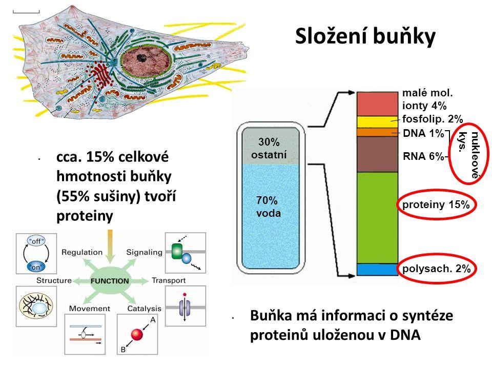 cca. 15% celkové hmotnosti buňky (55% sušiny) tvoří proteiny 70% voda 30% ostatní malé mol. ionty 4% fosfolip. 2% DNA 1% RNA 6% proteiny 15% polysach.