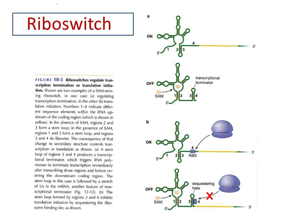 Centrální dogma MB Genetika - český překlad (2009) Principles of Genetics 5th edition (Snudtad, Simmons, 2009) Riboswitch