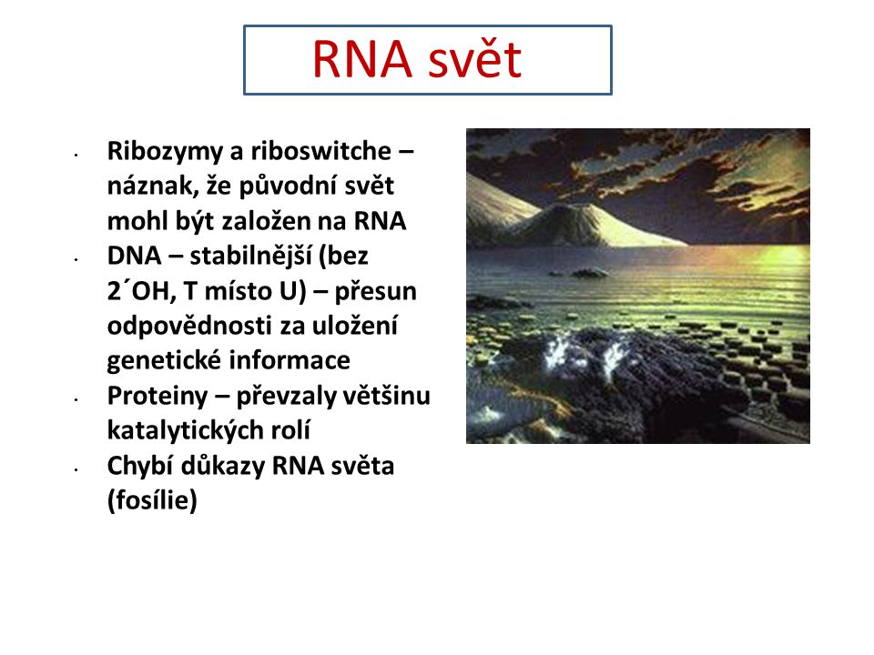 Ribozymy a riboswitche – náznak, že původní svět mohl být založen na RNA DNA – stabilnější (bez 2´OH, T místo U) – přesun odpovědnosti za uložení genetické informace Proteiny – převzaly většinu katalytických rolí Chybí důkazy RNA světa (fosílie) RNA svět