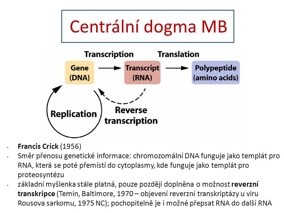 Centrální dogma MB Francis Crick (1956) Směr přenosu genetické informace: chromozomální DNA funguje jako templát pro RNA, která se poté přemístí do cytoplasmy, kde funguje jako templát pro proteosyntézu základní myšlenka stále platná, pouze později doplněna o možnost reverzní transkripce (Temin, Baltimore, 1970 – objevení reverzní transkriptázy u viru Rousova sarkomu, 1975 NC); pochopitelně je i možné přepsat RNA do další RNA