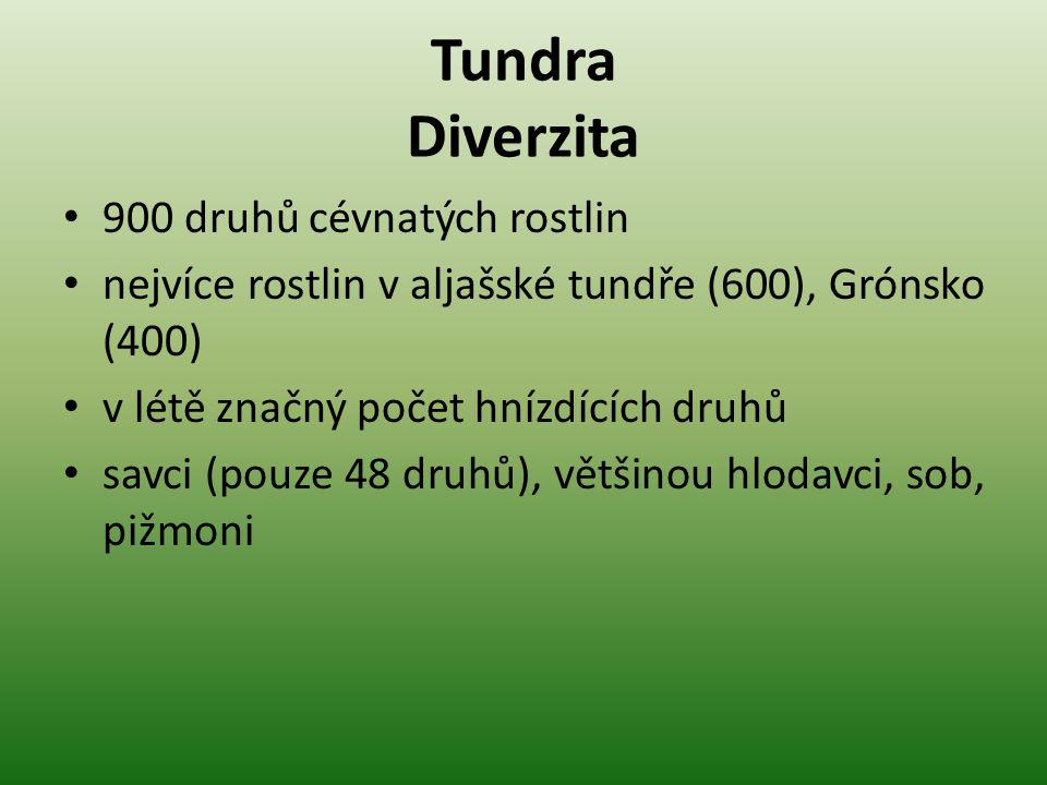 Tundra Diverzita 900 druhů cévnatých rostlin nejvíce rostlin v aljašské tundře (600), Grónsko (400) v létě značný počet hnízdících druhů savci (pouze