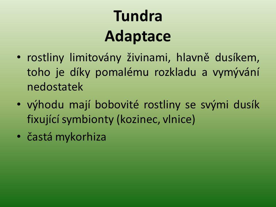 Tundra Adaptace rostliny limitovány živinami, hlavně dusíkem, toho je díky pomalému rozkladu a vymývání nedostatek výhodu mají bobovité rostliny se sv