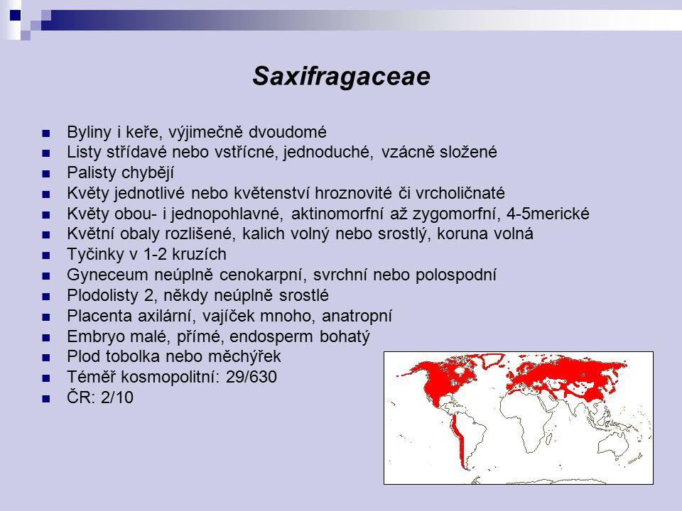 Saxifragaceae Byliny i keře, výjimečně dvoudomé Listy střídavé nebo vstřícné, jednoduché, vzácně složené Palisty chybějí Květy jednotlivé nebo květens