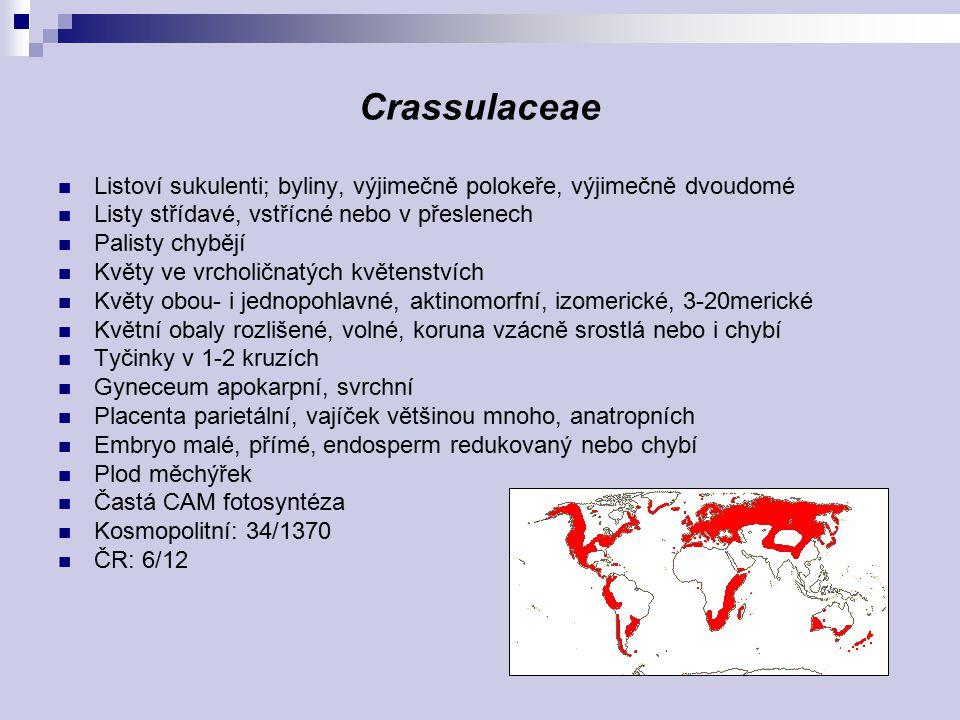 Crassulaceae Listoví sukulenti; byliny, výjimečně polokeře, výjimečně dvoudomé Listy střídavé, vstřícné nebo v přeslenech Palisty chybějí Květy ve vrc