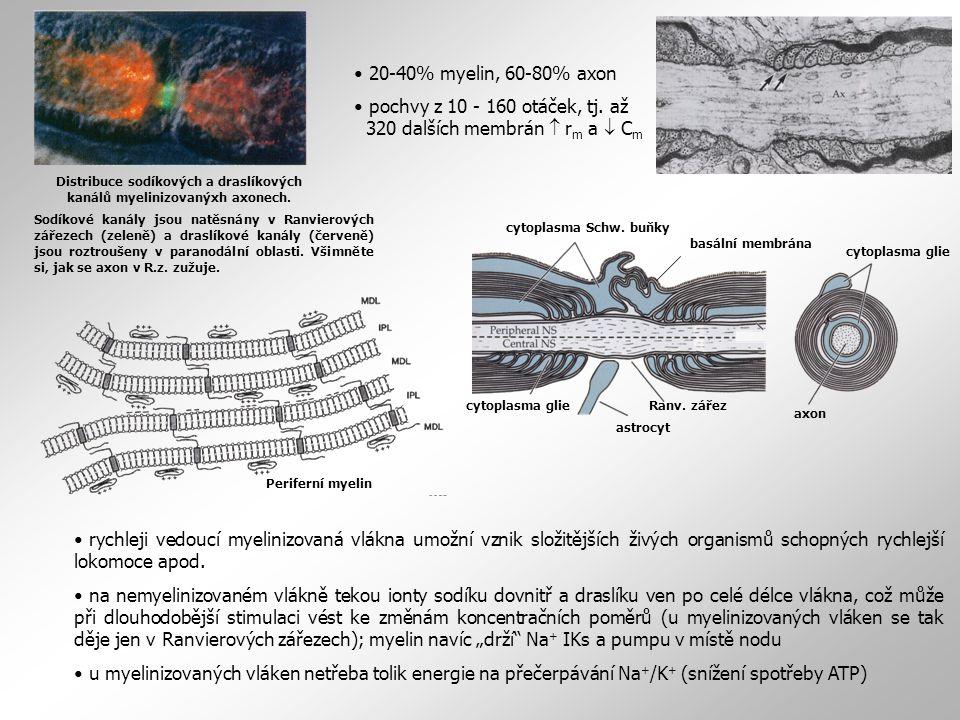 rychleji vedoucí myelinizovaná vlákna umožní vznik složitějších živých organismů schopných rychlejší lokomoce apod. na nemyelinizovaném vlákně tekou i