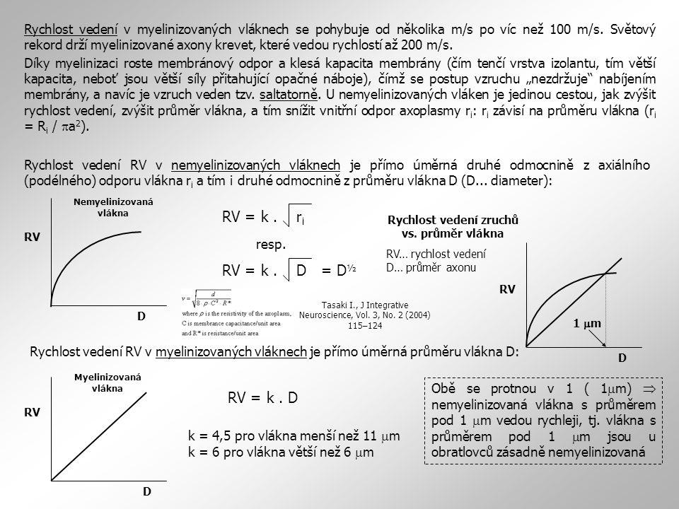 Rychlost vedení zruchů vs. průměr vlákna RV… rychlost vedení D… průměr axonu RV D Myelinizovaná vlákna RV D Nemyelinizovaná vlákna RV = k. r i RV = k.