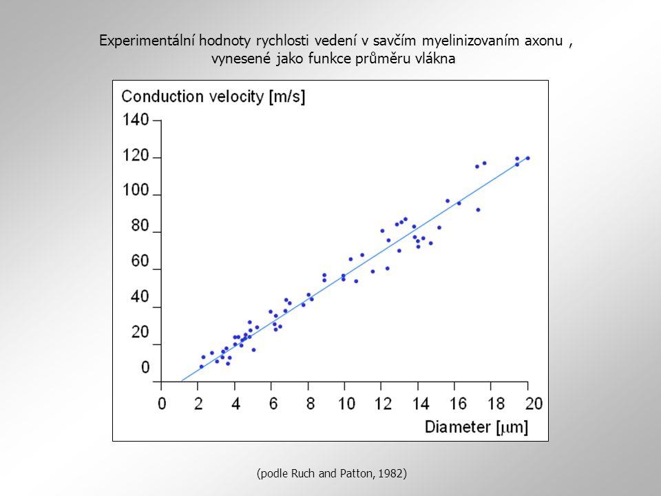 Experimentální hodnoty rychlosti vedení v savčím myelinizovaním axonu, vynesené jako funkce průměru vlákna (podle Ruch and Patton, 1982)