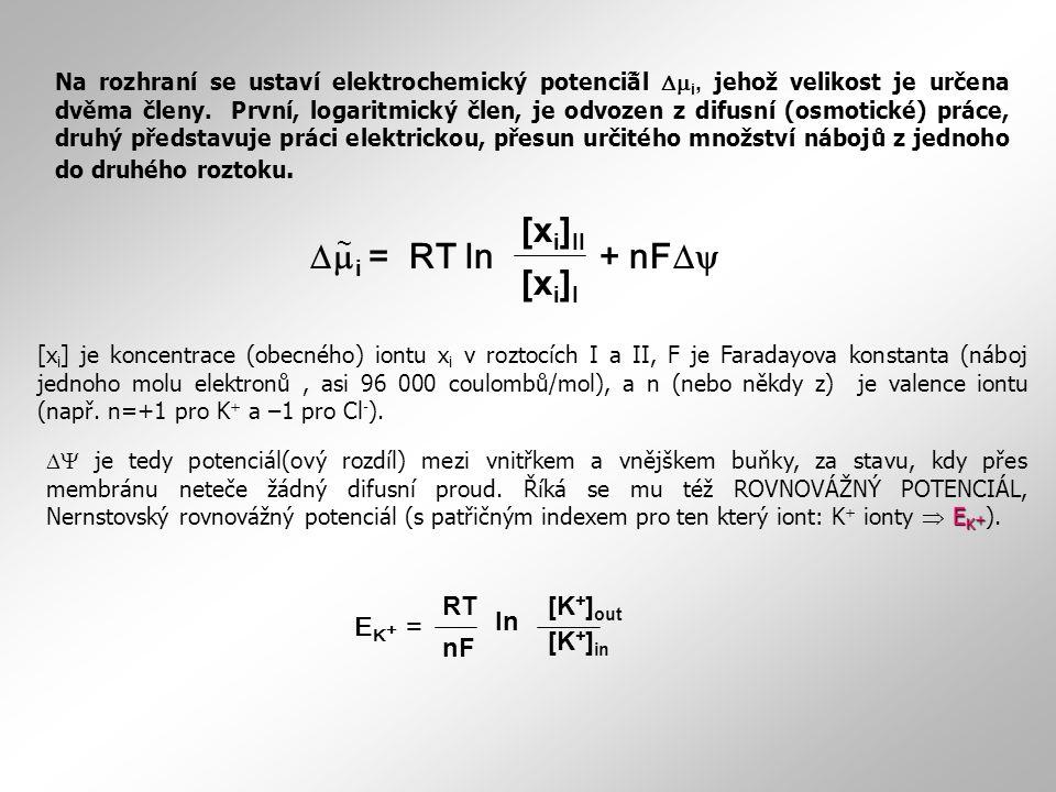 E K + = [K + ] out [K + ] in RT nF ln E K +  je tedy potenciál(ový rozdíl) mezi vnitřkem a vnějškem buňky, za stavu, kdy přes membránu neteče žádný