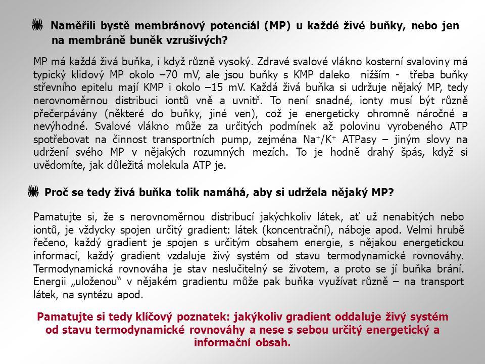 MP má každá živá buňka, i když různě vysoký. Zdravé svalové vlákno kosterní svaloviny má typický klidový MP okolo –70 mV, ale jsou buňky s KMP daleko
