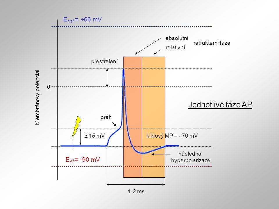 následná hyperpolarizace přestřelení práh Jednotlivé fáze AP E Na + = +66 mV E K + = -90 mV klidový MP = - 70 mV 0 Membránový potenciál  15 mV absolu