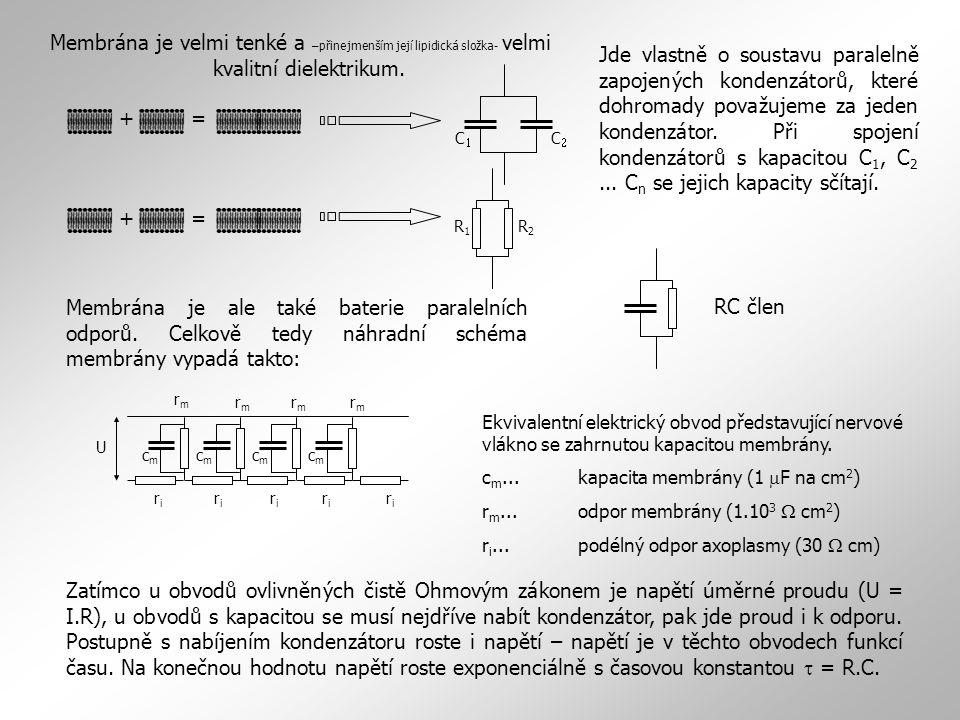 Membrána je velmi tenké a –přinejmenším její lipidická složka- velmi kvalitní dielektrikum. += Jde vlastně o soustavu paralelně zapojených kondenzátor