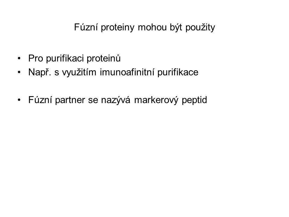 Fúzní proteiny mohou být použity Pro purifikaci proteinů Např. s využitím imunoafinitní purifikace Fúzní partner se nazývá markerový peptid