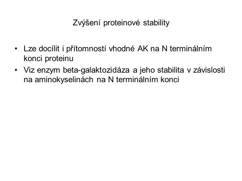Zvýšení proteinové stability Lze docílit i přítomností vhodné AK na N terminálním konci proteinu Viz enzym beta-galaktozidáza a jeho stabilita v závis
