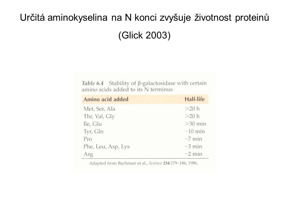 Určitá aminokyselina na N konci zvyšuje životnost proteinů (Glick 2003)
