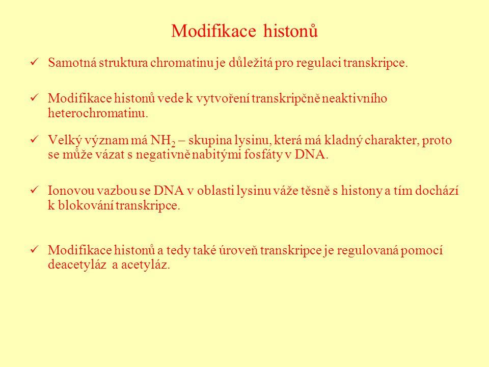 Modifikace histonů Samotná struktura chromatinu je důležitá pro regulaci transkripce. Modifikace histonů vede k vytvoření transkripčně neaktivního het