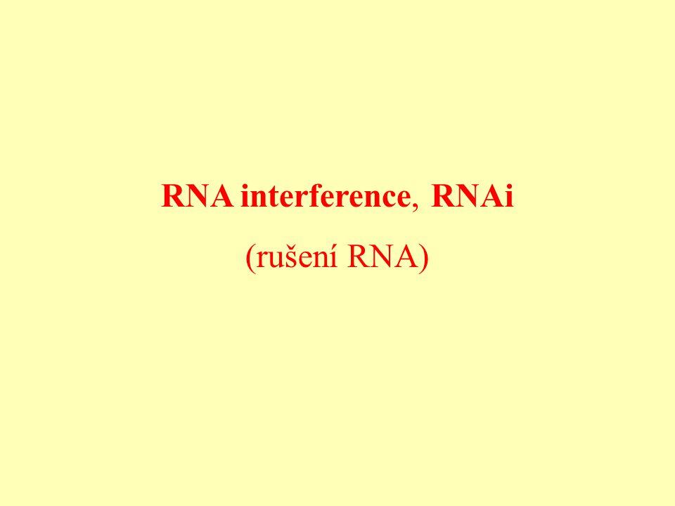 RNA interference, RNAi (rušení RNA)