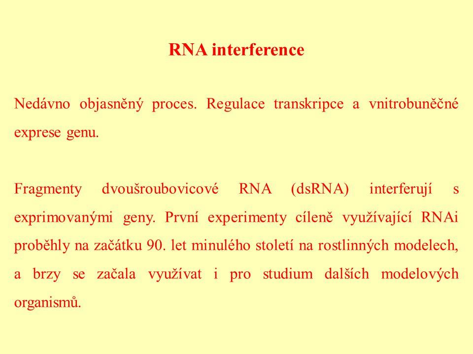 RNA interference Nedávno objasněný proces. Regulace transkripce a vnitrobuněčné exprese genu. Fragmenty dvoušroubovicové RNA (dsRNA) interferují s exp