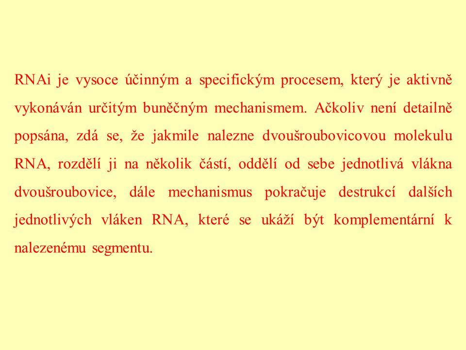 RNAi je vysoce účinným a specifickým procesem, který je aktivně vykonáván určitým buněčným mechanismem. Ačkoliv není detailně popsána, zdá se, že jakm