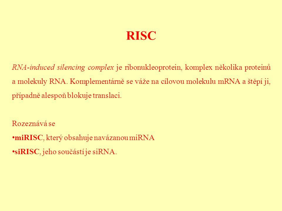 RISC RNA-induced silencing complex je ribonukleoprotein, komplex několika proteinů a molekuly RNA. Komplementárně se váže na cílovou molekulu mRNA a š