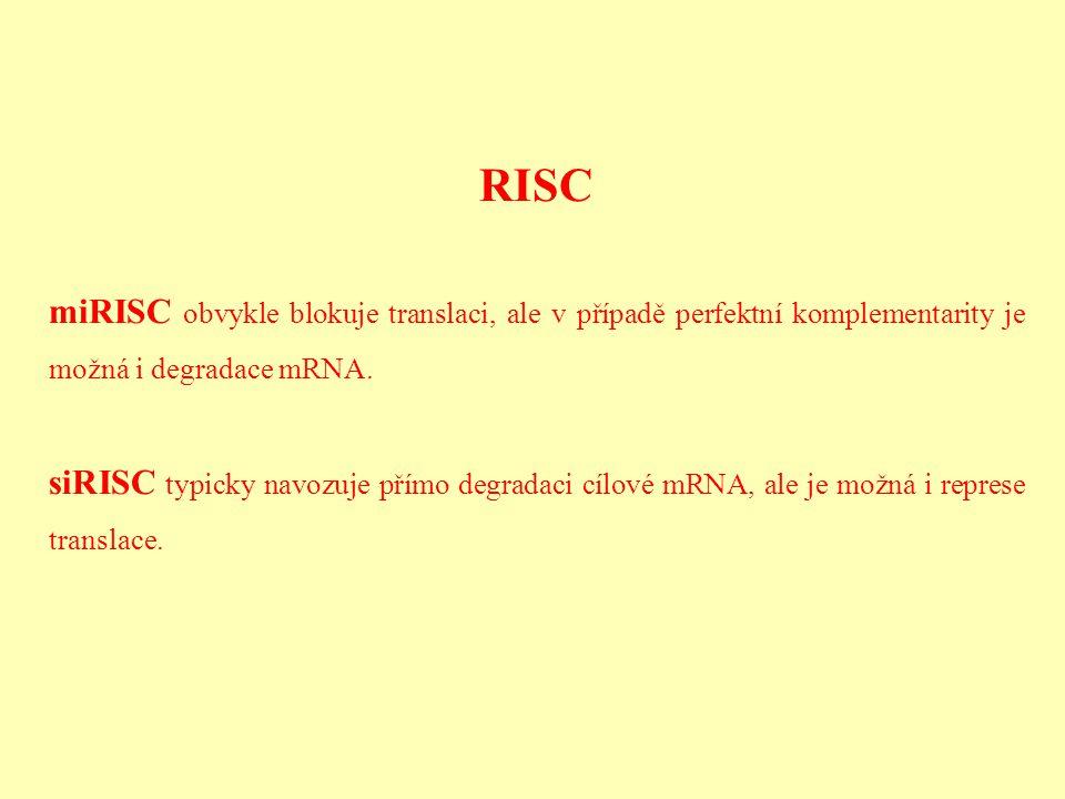 RISC miRISC obvykle blokuje translaci, ale v případě perfektní komplementarity je možná i degradace mRNA. siRISC typicky navozuje přímo degradaci cílo