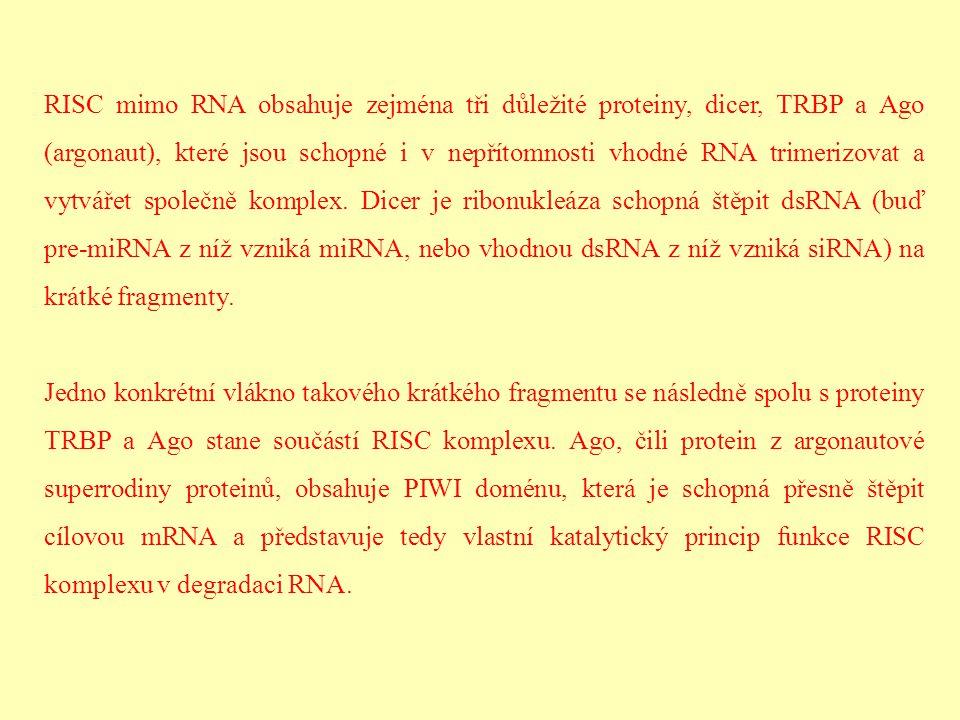 RISC mimo RNA obsahuje zejména tři důležité proteiny, dicer, TRBP a Ago (argonaut), které jsou schopné i v nepřítomnosti vhodné RNA trimerizovat a vyt