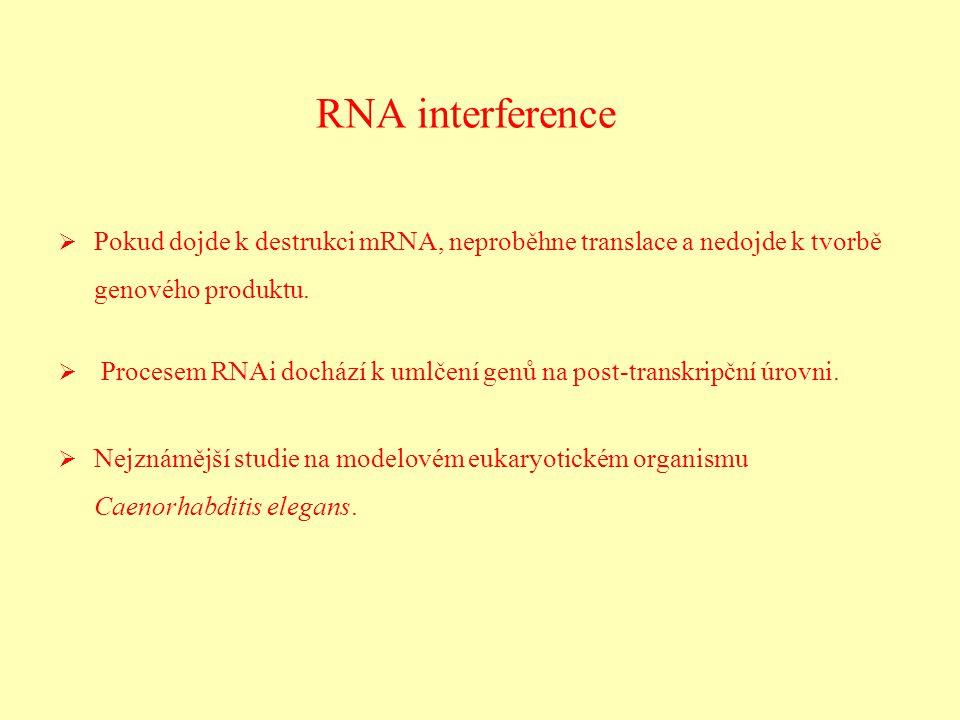 RNA interference   Pokud dojde k destrukci mRNA, neproběhne translace a nedojde k tvorbě genového produktu.   Procesem RNAi dochází k umlčení genů