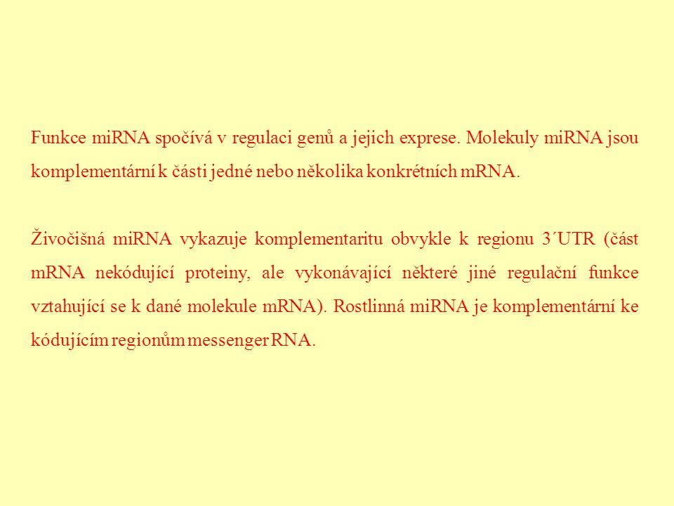 Funkce miRNA spočívá v regulaci genů a jejich exprese. Molekuly miRNA jsou komplementární k části jedné nebo několika konkrétních mRNA. Živočišná miRN