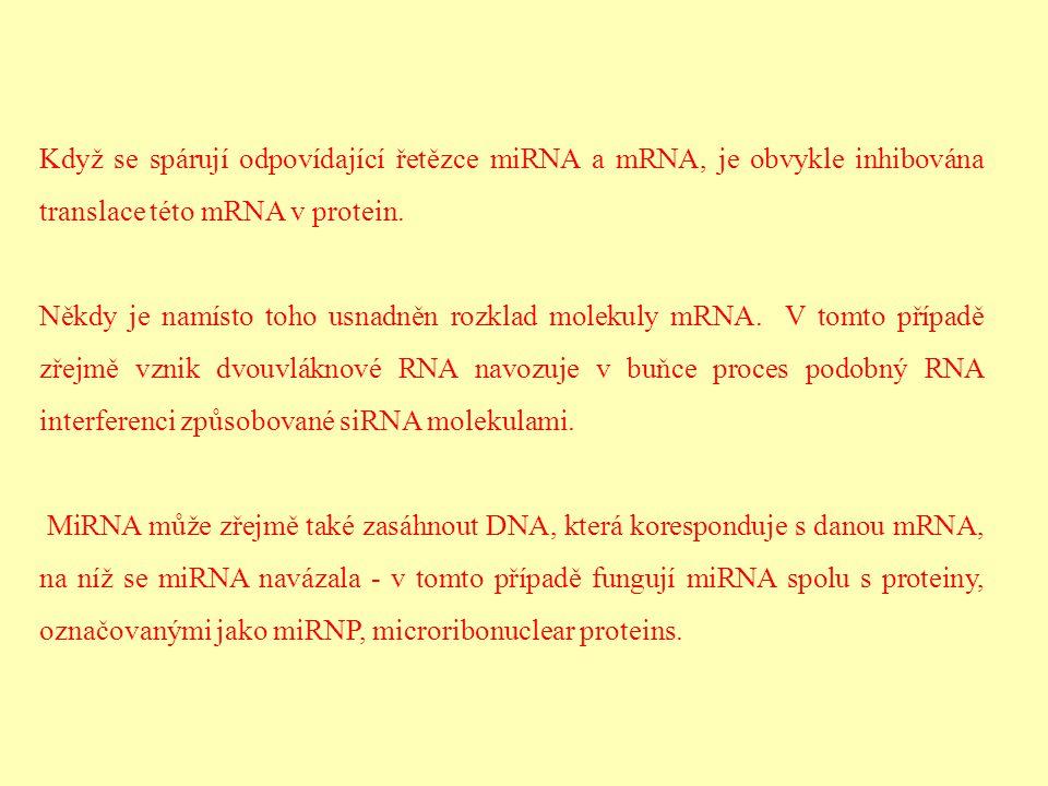 Když se spárují odpovídající řetězce miRNA a mRNA, je obvykle inhibována translace této mRNA v protein. Někdy je namísto toho usnadněn rozklad molekul