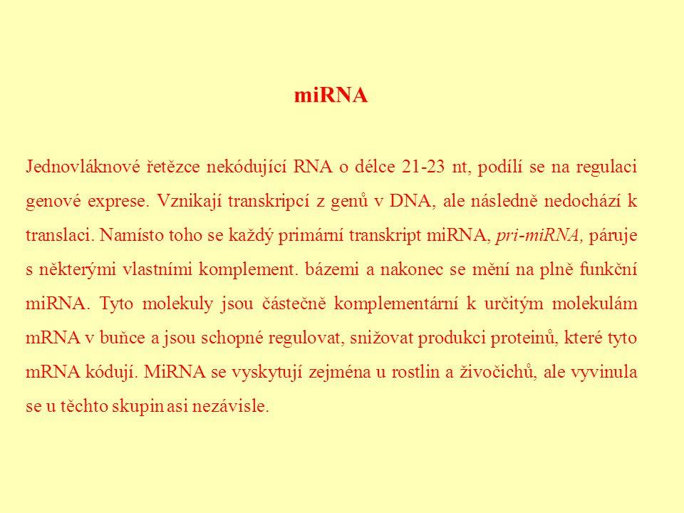 miRNA Jednovláknové řetězce nekódující RNA o délce 21-23 nt, podílí se na regulaci genové exprese. Vznikají transkripcí z genů v DNA, ale následně ned