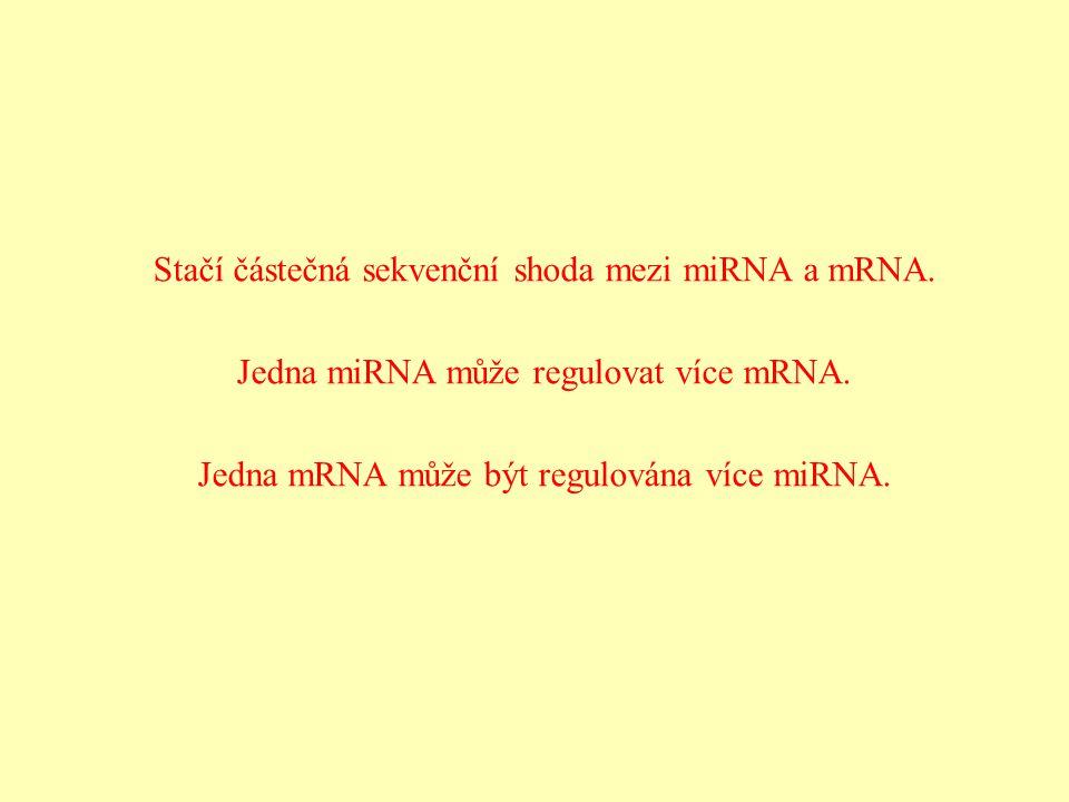Stačí částečná sekvenční shoda mezi miRNA a mRNA. Jedna miRNA může regulovat více mRNA. Jedna mRNA může být regulována více miRNA.