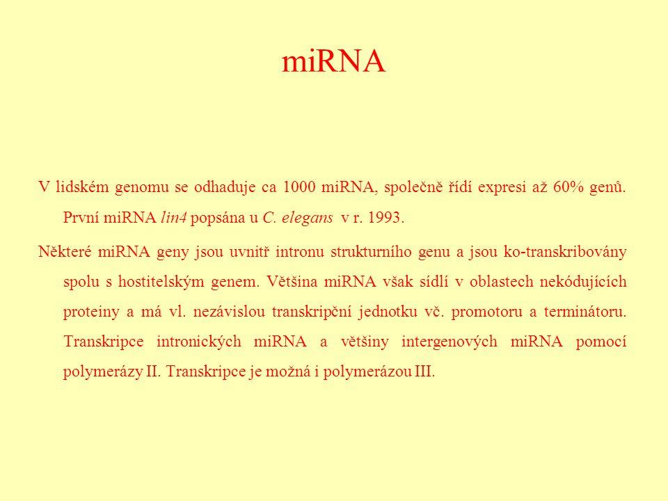 miRNA V lidském genomu se odhaduje ca 1000 miRNA, společně řídí expresi až 60% genů. První miRNA lin4 popsána u C. elegans v r. 1993. Některé miRNA ge