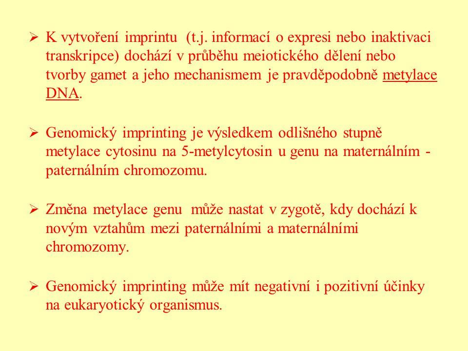   K vytvoření imprintu (t.j. informací o expresi nebo inaktivaci transkripce) dochází v průběhu meiotického dělení nebo tvorby gamet a jeho mechanis