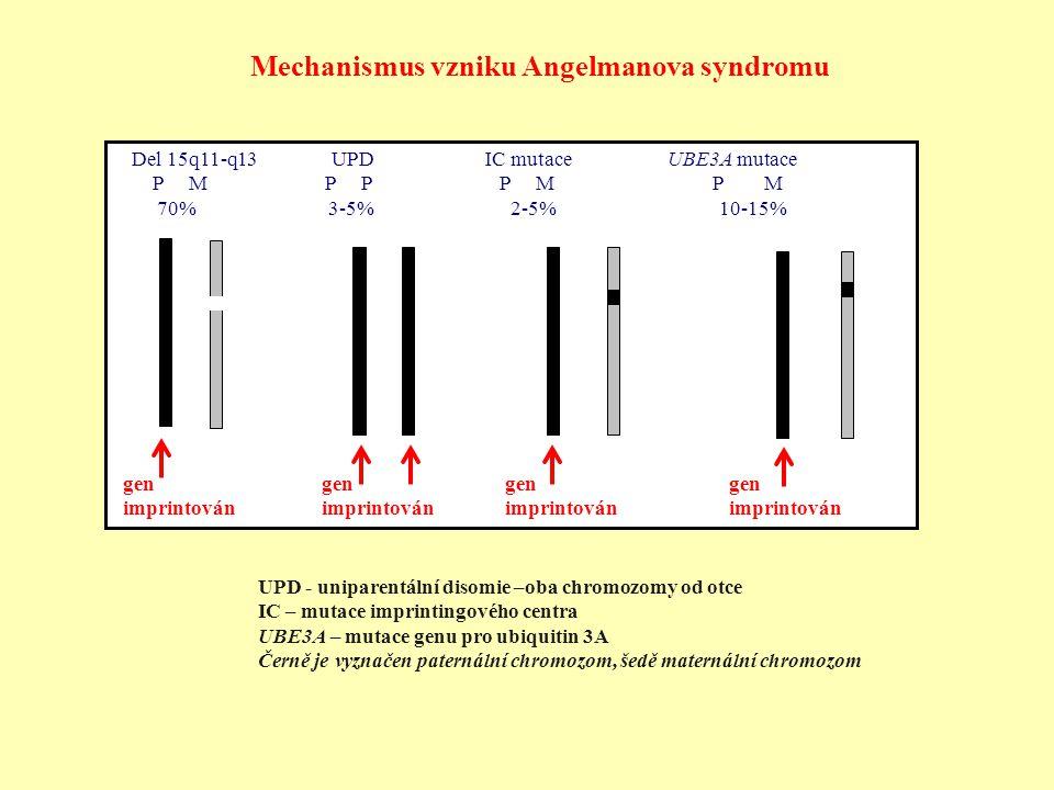 Mechanismus vzniku Angelmanova syndromu Del 15q11-q13 UPD IC mutace UBE3A mutace P M P P P M P M 70% 3-5% 2-5% 10-15% UPD - uniparentální disomie –oba
