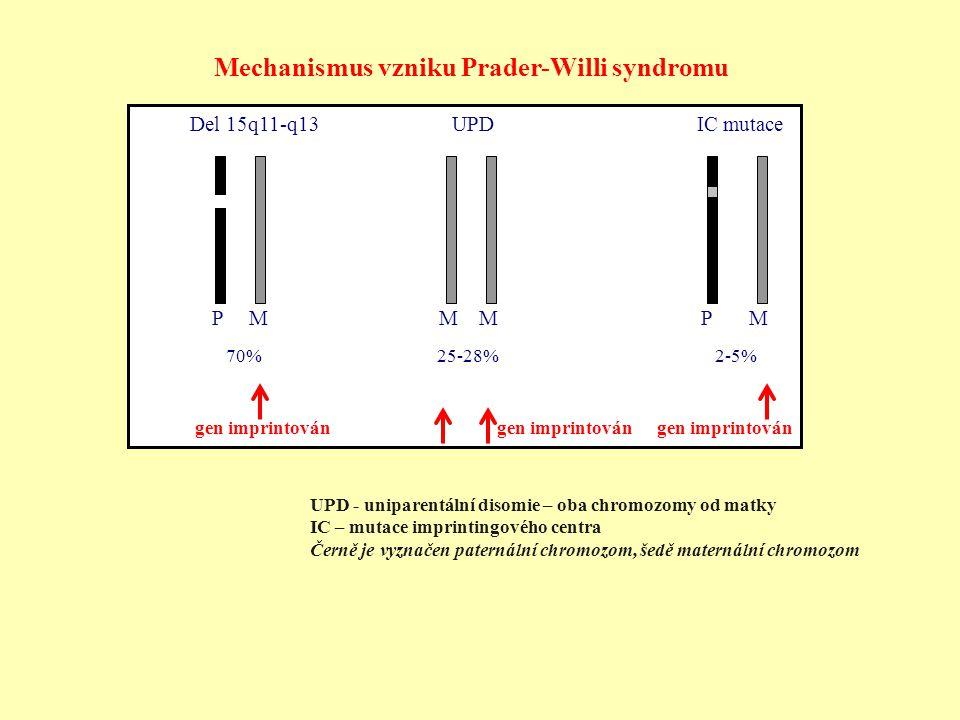 Del 15q11-q13 UPD IC mutace P M M M P M 70% 25-28% 2-5% Mechanismus vzniku Prader-Willi syndromu UPD - uniparentální disomie – oba chromozomy od matky