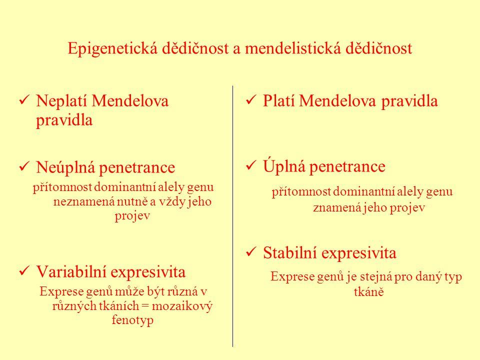 Epigenetická dědičnost a mendelistická dědičnost Neplatí Mendelova pravidla Neúplná penetrance přítomnost dominantní alely genu neznamená nutně a vždy
