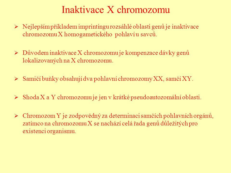 Inaktivace X chromozomu   Nejlepším příkladem imprintingu rozsáhlé oblasti genů je inaktivace chromozomu X homogametického pohlaví u savců.   Důvo