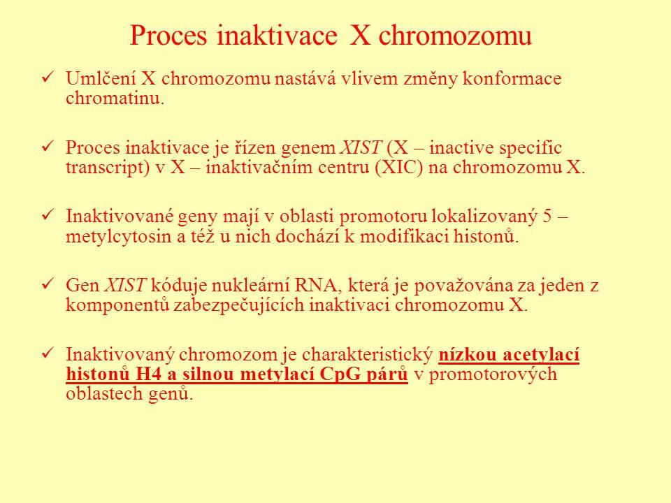 Proces inaktivace X chromozomu Umlčení X chromozomu nastává vlivem změny konformace chromatinu. Proces inaktivace je řízen genem XIST (X – inactive sp
