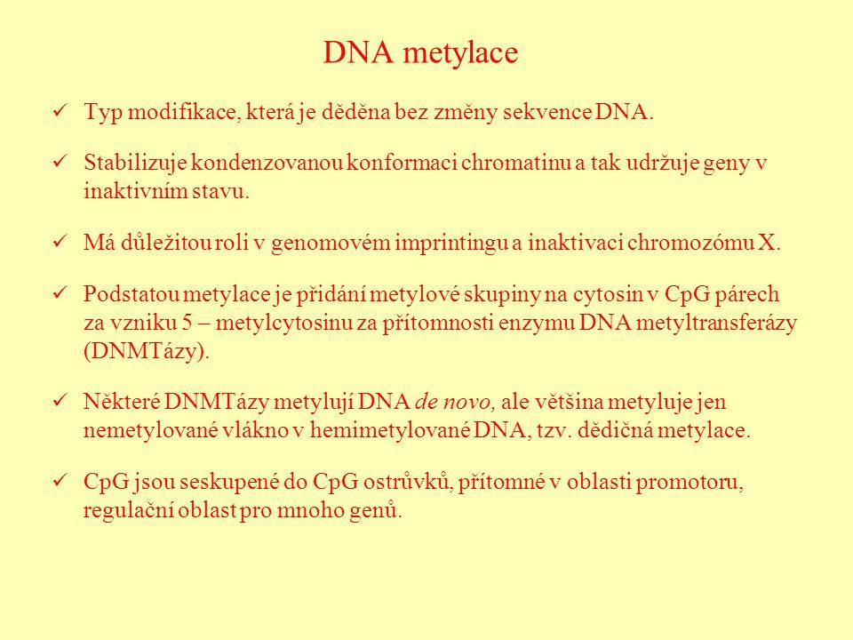 DNA metylace Typ modifikace, která je děděna bez změny sekvence DNA. Stabilizuje kondenzovanou konformaci chromatinu a tak udržuje geny v inaktivním s