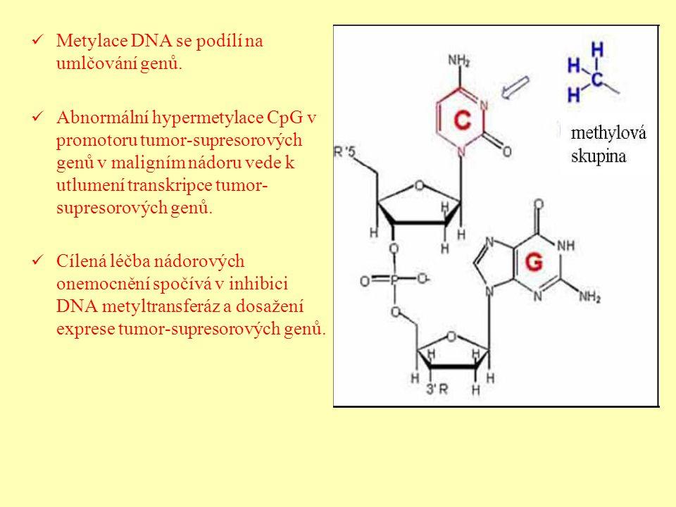 Metylace DNA se podílí na umlčování genů. Abnormální hypermetylace CpG v promotoru tumor-supresorových genů v maligním nádoru vede k utlumení transkri