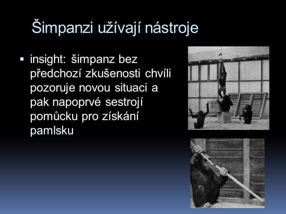 Šimpanzi užívají nástroje  insight: šimpanz bez předchozí zkušenosti chvíli pozoruje novou situaci a pak napoprvé sestrojí pomůcku pro získání pamlsku