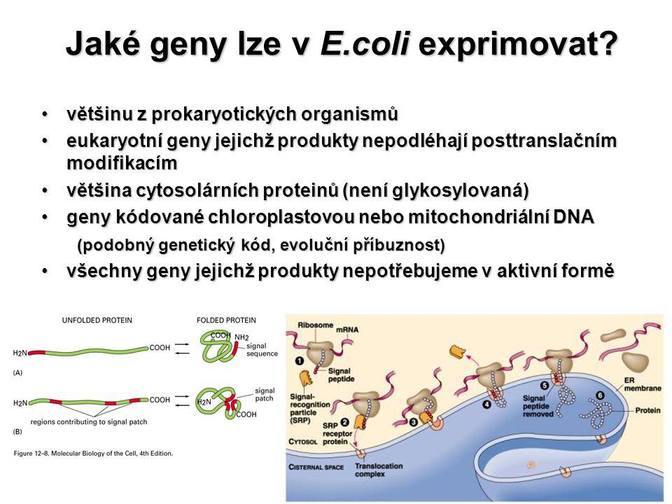 Jaké geny lze v E.coli exprimovat? většinu z prokaryotických organismůvětšinu z prokaryotických organismů eukaryotní geny jejichž produkty nepodléhají