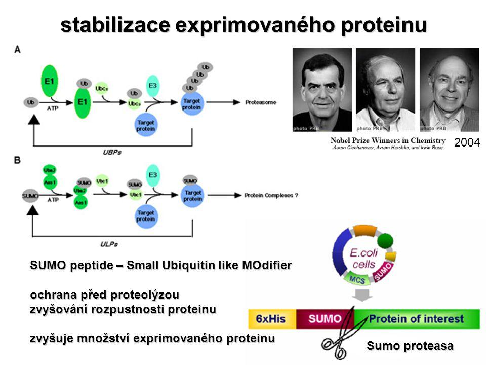 stabilizace exprimovaného proteinu Sumo proteasa SUMO peptide – Small Ubiquitin like MOdifier ochrana před proteolýzou zvyšování rozpustnosti proteinu