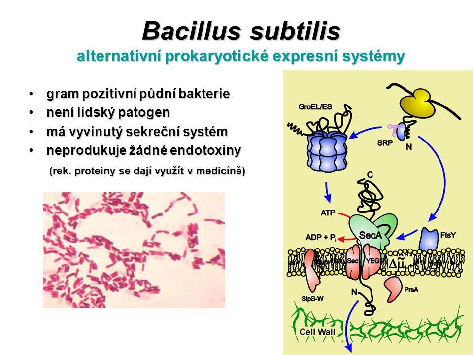 Bacillus subtilis alternativní prokaryotické expresní systémy gram pozitivní půdní bakteriegram pozitivní půdní bakterie není lidský patogennení lidsk