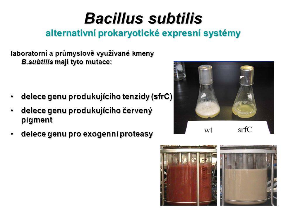 Bacillus subtilis alternativní prokaryotické expresní systémy laboratorní a průmyslově využívané kmeny B.subtilis mají tyto mutace: delece genu produk