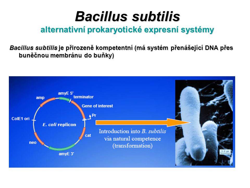 Bacillus subtilis alternativní prokaryotické expresní systémy Bacillus subtilis je přirozeně kompetentní (má systém přenášející DNA přes buněčnou memb