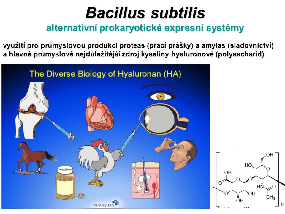 Bacillus subtilis alternativní prokaryotické expresní systémy využití pro průmyslovou produkci proteas (prací prášky) a amylas (sladovnictví) a hlavně